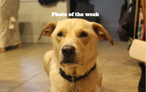 Photo of the week: animals