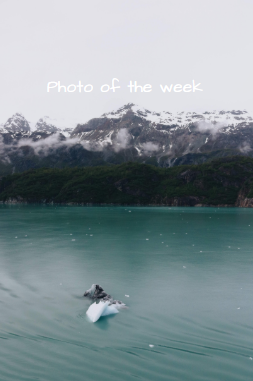 Photo of the week: photographer